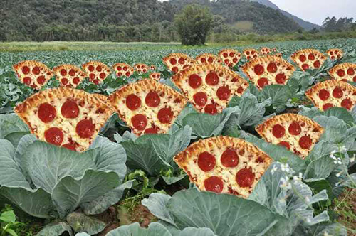 image of a pizza patch