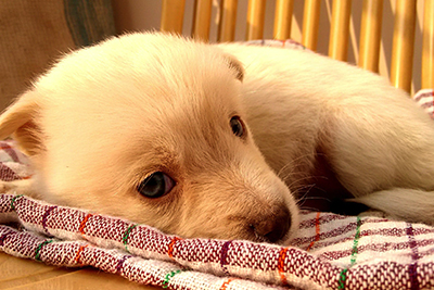 image of a little puppy